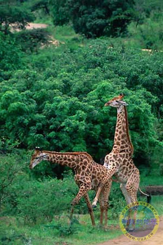 动物世界 动物交配 未名 百度空间