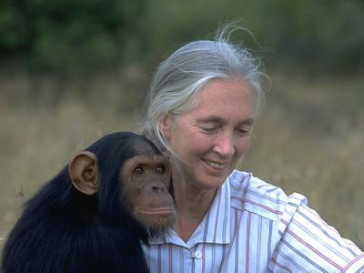 走进黑猩猩世界的珍·古道尔