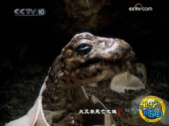 神奇自然 恐龙大艾尔死亡之谜