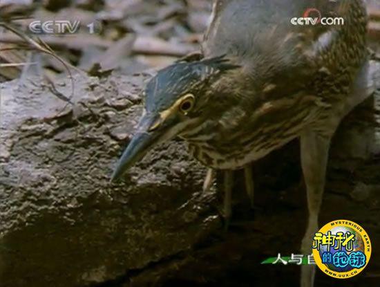自然启示-湿地猎手(下)
