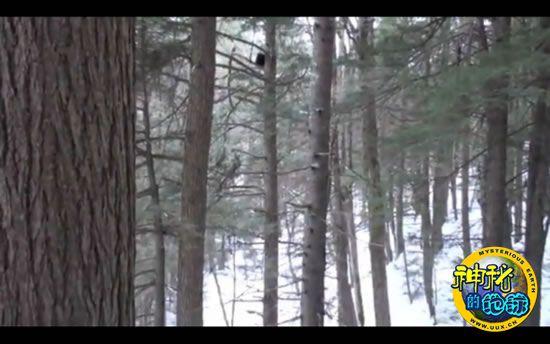 美国拍摄到森林中疑似大脚怪的神秘动物视频