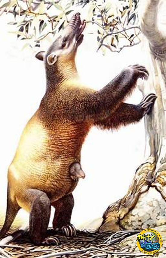 6万年前人类差点灭绝