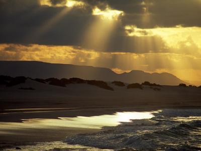 探秘也门神奇小岛:索科特拉岛
