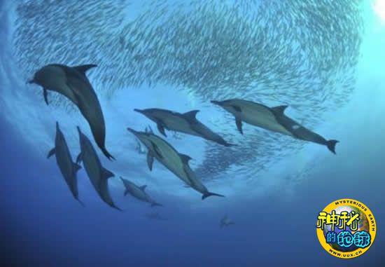 新西兰研究人员发现一些鱼类也会 说话