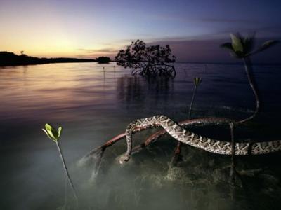 2010年新增的世界自然遗产