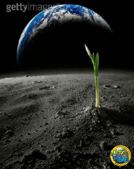 加拿大在北极建模拟温室为太空种菜积累经验