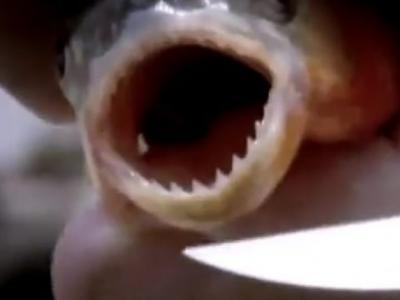Discovery探索频道《河中巨怪》——食人鱼进攻
