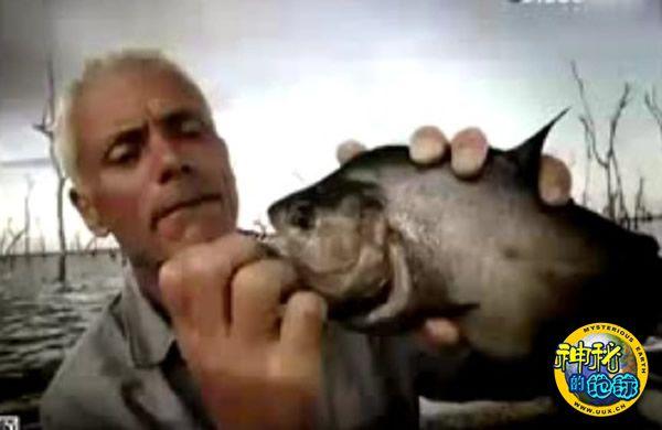 Discovery探索频道《河中巨怪》——凶猛