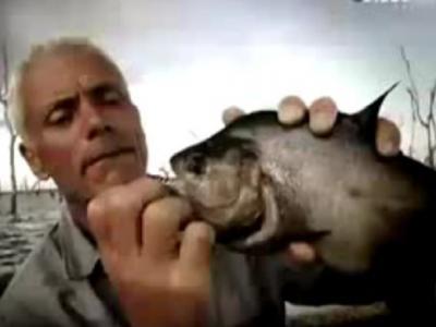 Discovery探索频道《河中巨怪》——凶猛巨鲶