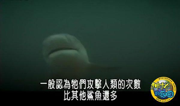 Discovery探索频道《河中巨怪》——匿踪