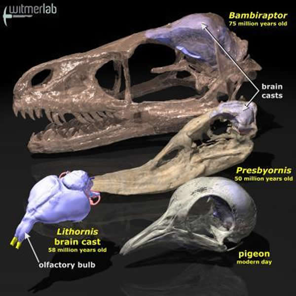 现代鸟类的祖先不得不在由恐龙向鸟类演化_印尼分分彩开奖软件