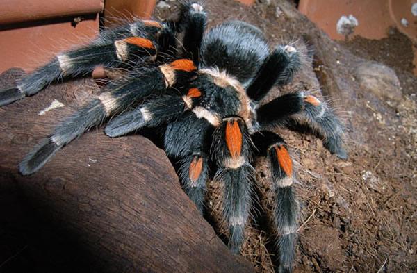 蜘蛛的丝拖鞋帮助它们攀爬