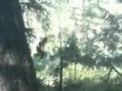 """旅行者在美国华盛顿州斯波坎市的下游公园拍摄到""""野人""""视频"""