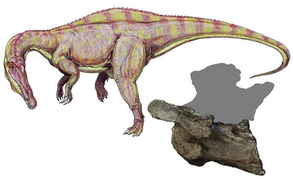 恐龙 澳洲/澳洲发现的恐龙新种揭示大陆漂移时间