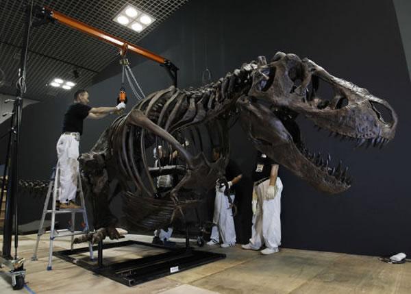 东京即将举办2011年恐龙博览会_怎么买彩票才能中奖率