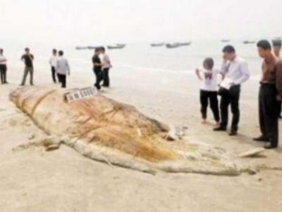 """广东海滩发现巨型神秘""""海怪""""尸体 体长17米重4.5吨"""