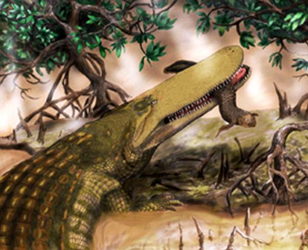 古生物学家在摩洛哥发现史前巨鳄化石——