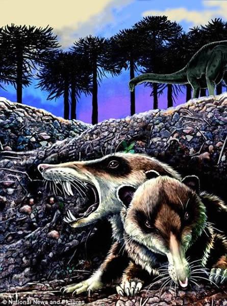 古生物学家在阿日本漫画手球根廷挖掘到鼠类远古祖先的