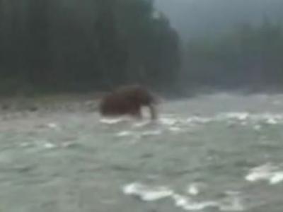 俄罗斯西伯利亚拍摄到一只史前猛犸象渡河的视频