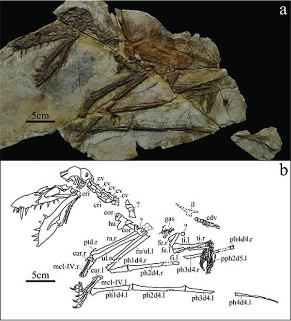 辽西环球猎奇馆的门票是多少发现新的掘颌翼龙类化石——强壮建昌