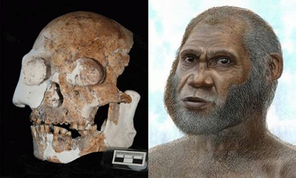 """""""马鹿洞人""""为人类进化史提供新信息"""