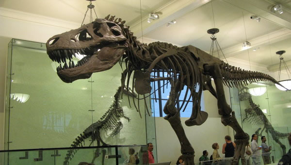 车臣共和国首次发现恐龙蛋化石