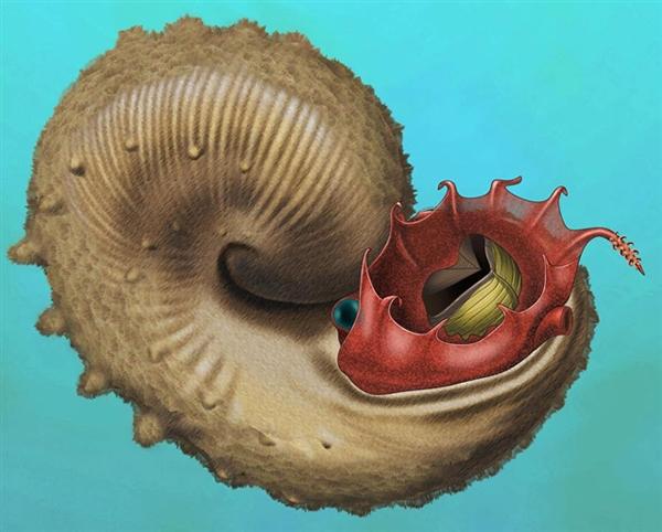 远古菊猎奇的日常用具石类一些成员是定栖类生物