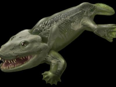 新技术推翻3.6亿年前四足动物鱼石螈旧理论的移动方式