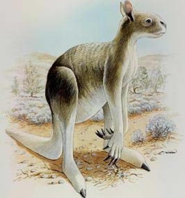 人类赠猎奇是什么意思对4万年前塔斯马尼亚巨型有袋类动物