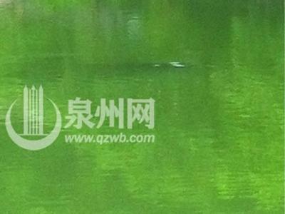 泉州清源山天湖拍摄到水怪?