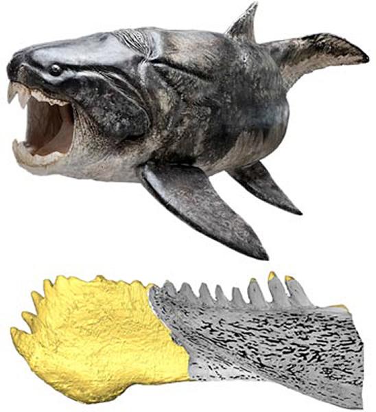 最新研究显示盾皮鱼拥有真正的牙齿