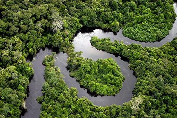 亚马逊热带雨林的规模正在缩小