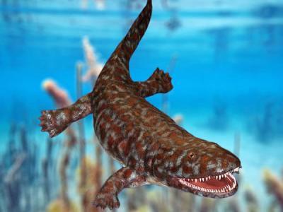 对早期四足动物化石的X射线检查结果