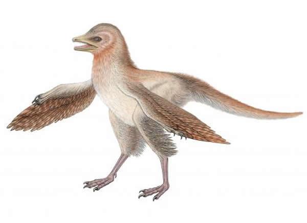 中国羽龙(Eosinopteryx)复原图