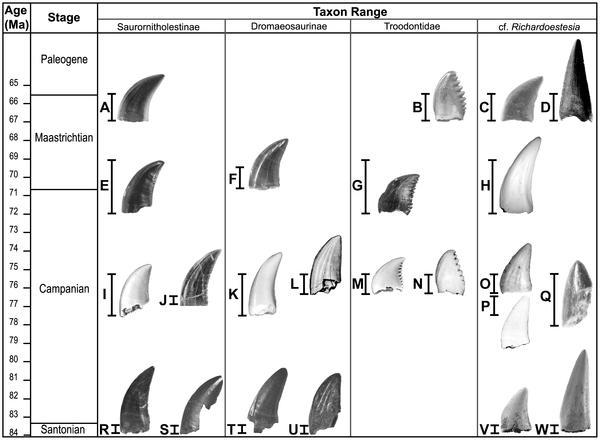 牙齿化石代表了所属种类的时代延限