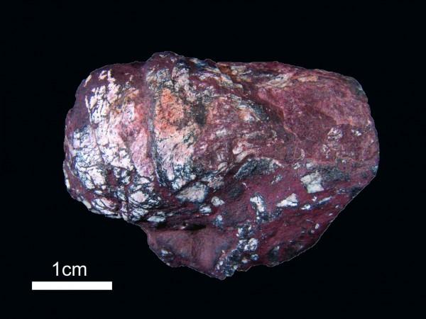 中发现近百颗古绦虫卵化石图片