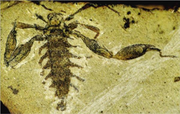 恐怖虫化石