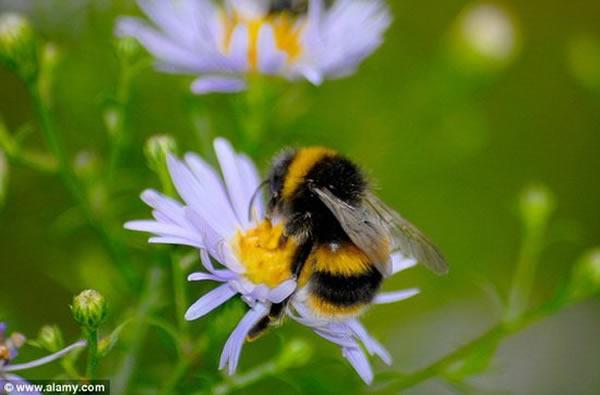 花卉电场信号与花卉的实体属性相一致,用于吸引蜜蜂的到来