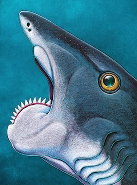 旋齿鲨复原图