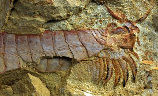 """5.2亿年前奇特海洋生物""""头甲掀开"""""""