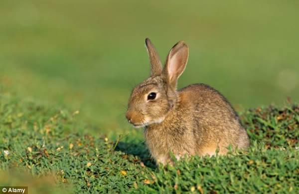 兔子才是导致尼安德特人灭亡的真凶?