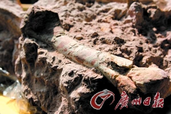 三水化石爱好者工地内发现近千件哺乳动物以及爬行动物化石
