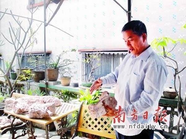 赵灿辉家中阳台上,堆满了大大小小的化石。