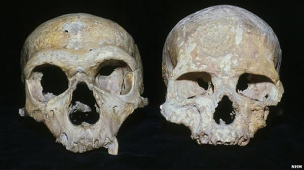 从头骨上来看,尼安德特人的眼眶比现代人类的眼眶更大,其可能利用了大脑更多的部分来处理视觉信息