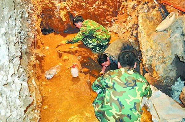 """""""栾川人""""是在河南境内首次出土的直立人(猿人)化石"""