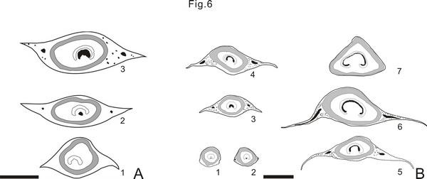 辽西侏罗纪北票阿氏茎(新种)(A)和新生代紫萁植物Osmunda shimokawaensis(B)叶柄基横切面构造发育阶段及其比较图