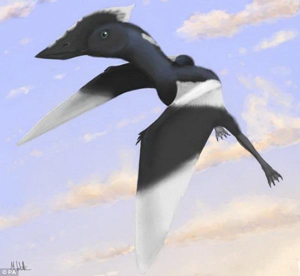 乌鸦大小的翼龙新物种的复原图