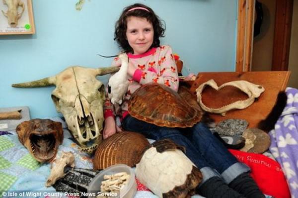 黛西-莫里斯的卧室中收藏着各种动物骨骼化石、贝壳和骨骼