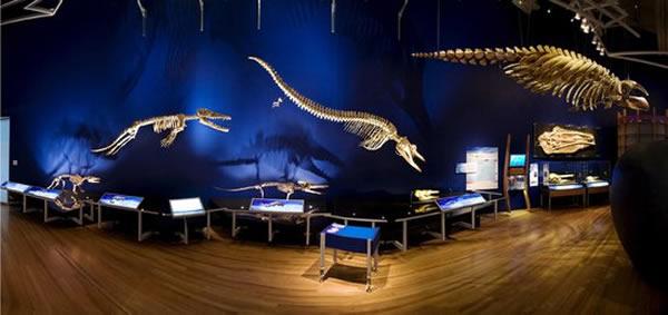 鲸鱼和人类一样属于哺乳动物,而且它们的祖先曾经生活在陆地上。
