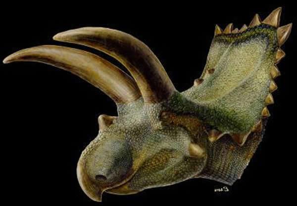 墨西哥发现的三角龙复原图